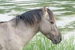 Koń w otwartym polu Zdjęcie Royalty Free