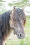 Koń w otwartym polu Fotografia Royalty Free