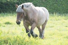 Koń w otwartym polu Obraz Royalty Free