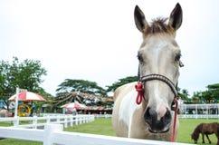 Koń w polu obrazy stock
