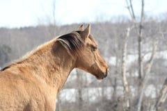 Koń w polu Zdjęcia Stock