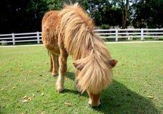 Koń w polu Zdjęcie Royalty Free