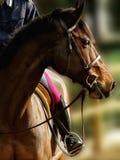 Koń w przedpolu Fotografia Stock