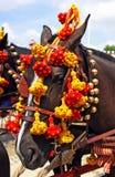 Koń w Seville jarmarku, Andalusia, Hiszpania Obrazy Royalty Free