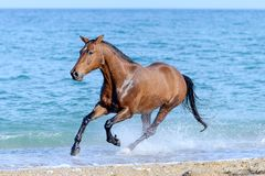 Koń w wodzie Obraz Royalty Free