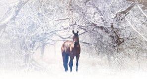 Koń w zima krajobrazie Zdjęcie Stock