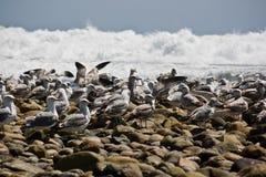 kołysa seagulls Zdjęcie Royalty Free