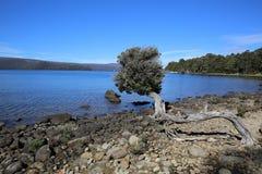 Kołysankowy jeziora St Clair park narodowy Zdjęcie Royalty Free