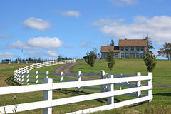 koń z gospodarstw rolnych Zdjęcia Royalty Free