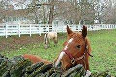 koń z gospodarstw rolnych Zdjęcie Royalty Free
