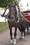 Koń z trenerem Zdjęcie Royalty Free