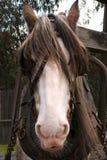 koń zanurzenia Fotografia Stock