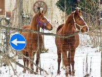 koń zima dwa Zdjęcia Royalty Free