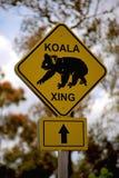 Koala που διασχίζει το σημάδι Στοκ Εικόνες