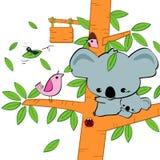 Koala στο δέντρο Στοκ Φωτογραφία