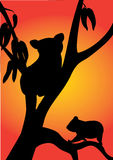 Koala illustration libre de droits