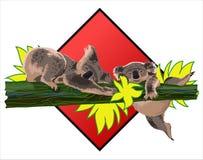 koala Stockfotografie