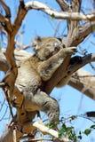 Wildlife of Australia Stock Photography