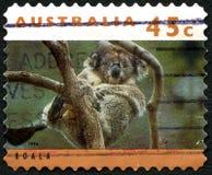 Koala Australian Postage Stamp Royalty Free Stock Photo