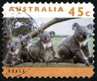 Koala Australian Postage Stamp Royalty Free Stock Photography