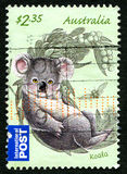Koala Australische Postzegel Stock Afbeelding