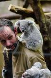 Koala Baby stock photos