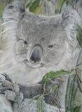 Koala Bear. Pencil Drawing of a Koala bear, created by the photographer Stock Photo