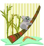 Koala Bear with Boomerang Royalty Free Stock Photography