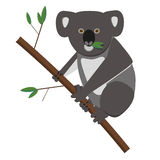 Koala bear. Eating eucalyptusleaves. Flat style EPS10 vector illustration Stock Photography