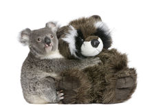 Koala bear hugging teddy bear stock image