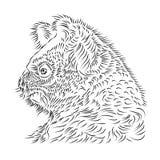 Koala bear Illustration Royalty Free Stock Image