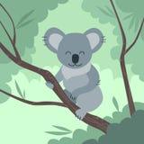 Koala Bear Jungle Tree Flat Vector Royalty Free Stock Images