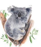 Koala bear sitting in the tree watercolor painting illustration isolated on white background Stock Photo