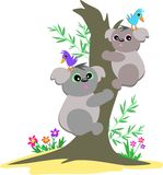 Koala Bears Up a Tree Stock Photos