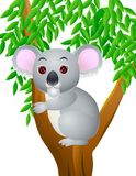 Koala cartoon Stock Photo