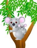 Koala cartoon Stock Photography