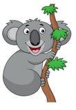Koala Cartoon Stock Image