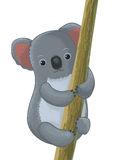 Koala cartoon character Stock Image