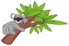 Koala climbing on the tree Royalty Free Stock Image