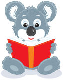 Koala cub reading a book Royalty Free Stock Images