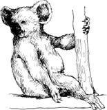 Koala disegnata a mano Fotografia Stock Libera da Diritti