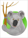 Koala on dry eucalyptus tree. Illustration of koala on eucalyptus tree,with green circle and white background Royalty Free Stock Photo