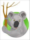 Koala on dry eucalyptus tree Royalty Free Stock Photo