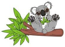 Koala eating on the tree Royalty Free Stock Images