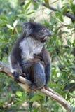 Koala em um tronco de árvore imagem de stock