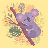 Koala exhausta de la mano linda que duerme en la rama foto de archivo libre de regalías