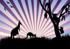 Koala and kangaroo in purple rays Royalty Free Stock Photos