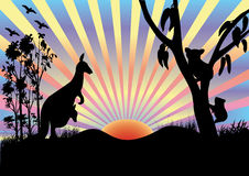 Koala and kangaroo in sunset. Koala in  tree and kangaroo in sunset Royalty Free Stock Image