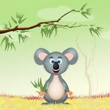 Koala med eucalipto Royaltyfri Bild