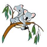 Koala med känguruunge Arkivbilder